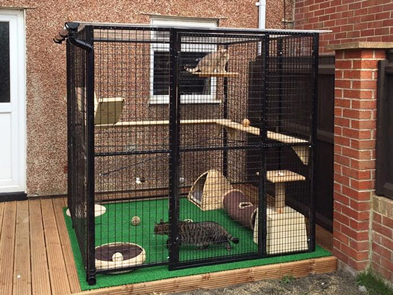 outdoor cat play area