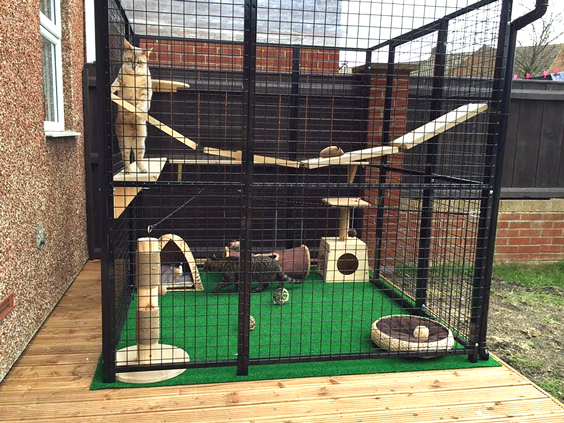safe outdoor cat play area