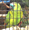 amazon-parrot-cage