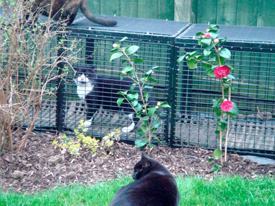 rehomed cat protection league