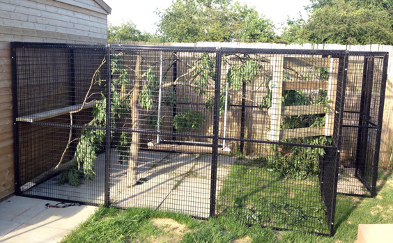 Outdoor Bird Cages Photo 36