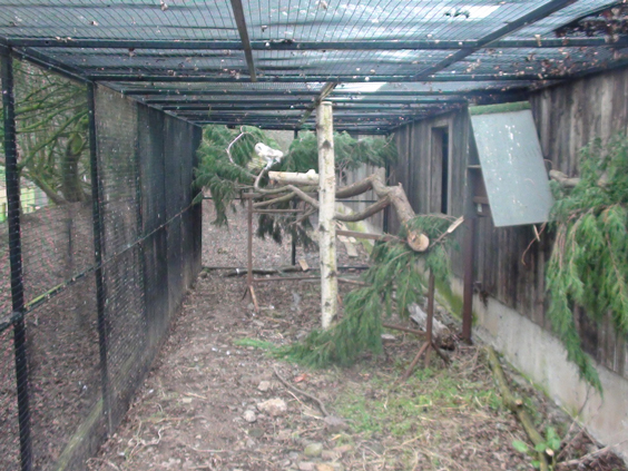 tree-in-owl-enclosure