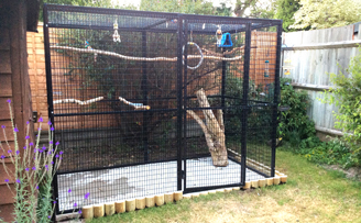 Blue fronted amazon play pen