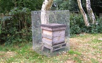 Woodpecker cage