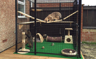 Ares & Apollo's safe outdoor play area